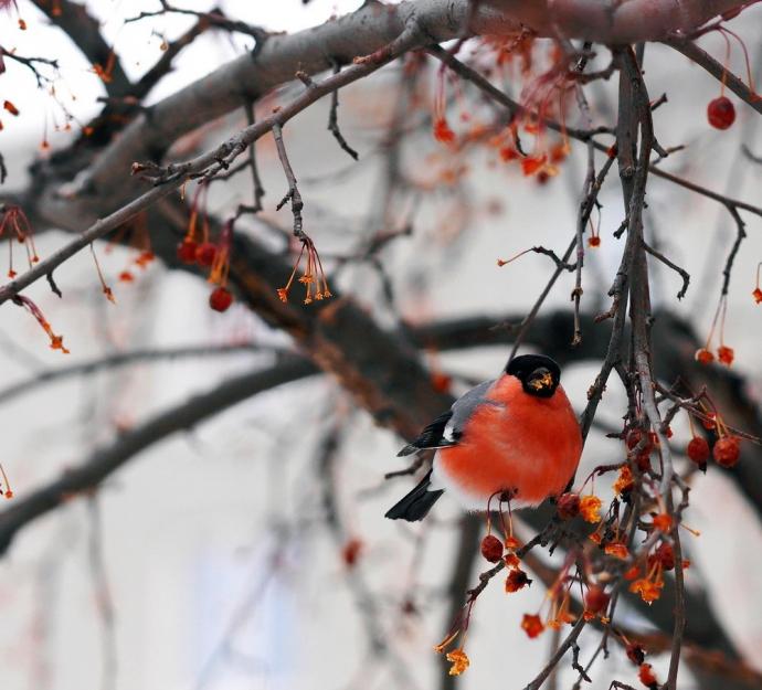 ABC Mapowania - Ptaki zimujące w Polsce