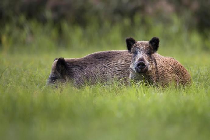Dylematy rolnika: ochrona różnorodności biologicznej a szkody rolnicze