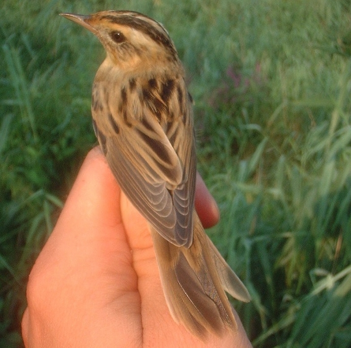 Birdwatching na Polesiu