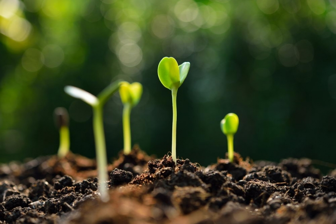 Gleba – fabryka życia